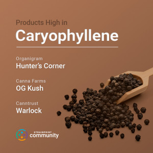 Strains high in Beta-Caryophyllene