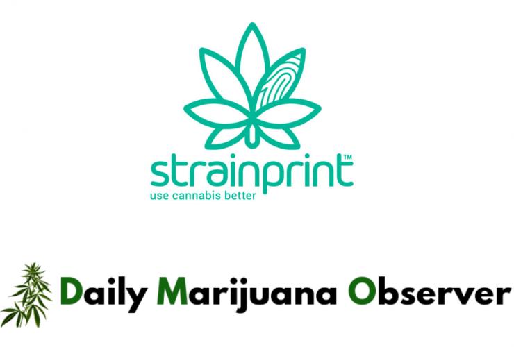 Daily Marijuana Observer