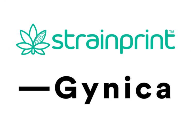 Gynica