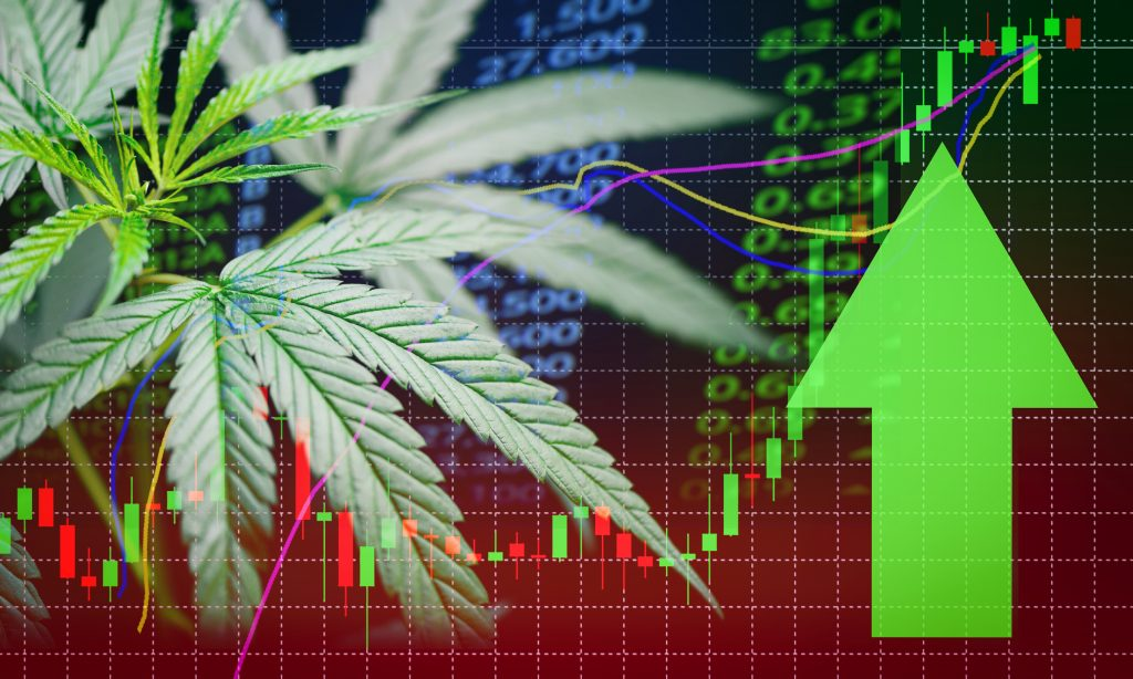 Cannabis Stocks: Is Now The Time To Get Involved?