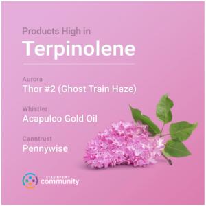 Terpiolene